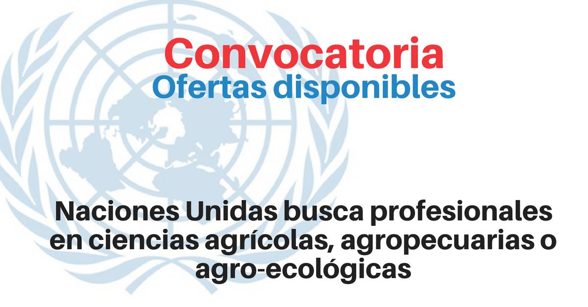 Trabaja con Naciones Unidas