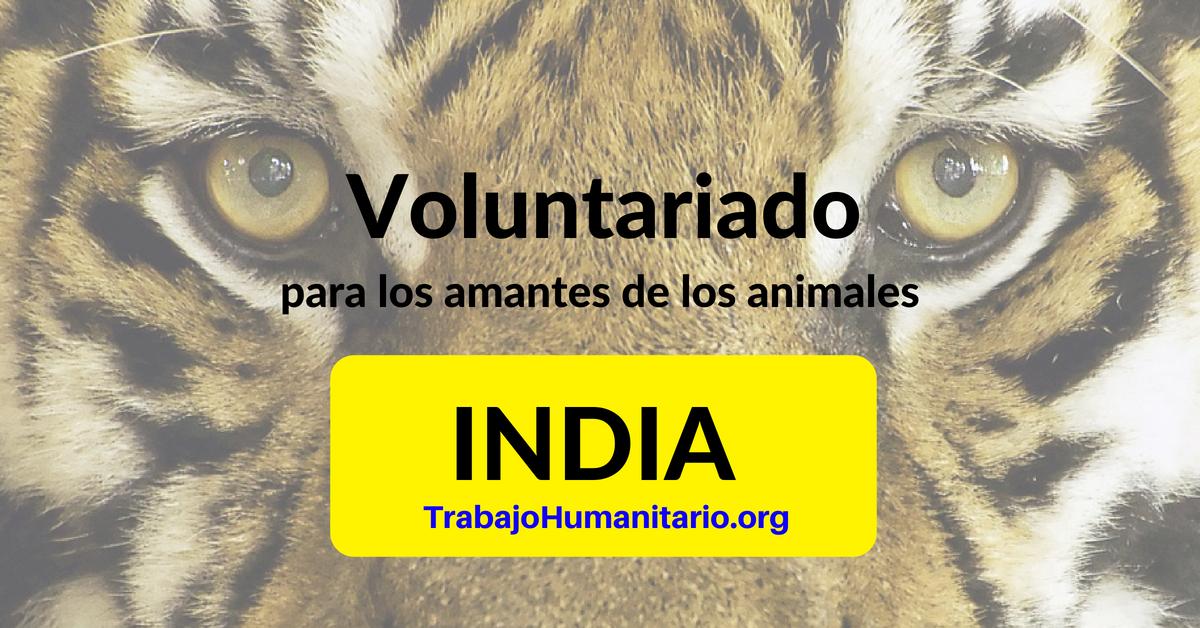 Voluntariado en la India para los amantes de los animales